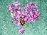 hart van rozenblaadjes
